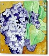 Lilacs Acrylic Print