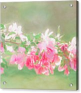 Lilacs In Sunshine Acrylic Print