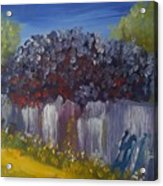 Lilacs On A Fence  Acrylic Print by Steve Jorde