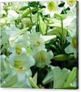 Lilies 11 Acrylic Print