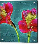 Lilies 18-10 Acrylic Print
