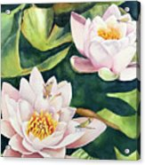 Lilies And Dragonflies Acrylic Print