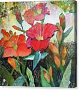 Lilies And Hummingbird Acrylic Print
