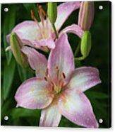 Lilies And Raindrops Acrylic Print