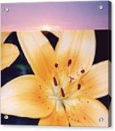 Lilies And Sky 3 Acrylic Print