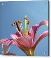 Lilies Art Prints Pink Lily Flower Giclee Art Prints Baslee Troutman Acrylic Print