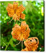 Lilies Art Tiger Lily Flowers Canvas Prints Floral Baslee Troutman Acrylic Print