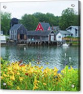 Lilies By The Bay, Cape Porpoise Me Acrylic Print