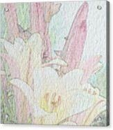 Lilies. Flowers And Buds. Acrylic Print