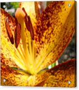 Lilies Glowing Orange Lily Flower Floral Art Print Canvas Baslee Troutman Acrylic Print