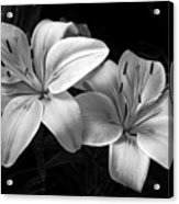 Lilies In Black And White Acrylic Print