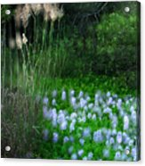 Lilies In Bloom Acrylic Print