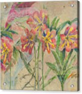 Lilies In Disguise Acrylic Print