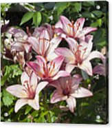 Lilies In Pink Acrylic Print