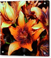 Lilies In The Shadow Acrylic Print