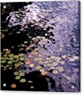Lilies In The Water Acrylic Print