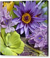 Lilies No. 38 Acrylic Print by Anne Klar