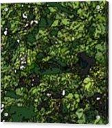 Lilies Of The Lake Acrylic Print