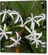 Lilies Of The Swamp Acrylic Print