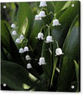 Lilies Of The Valley - Watercolor Acrylic Print