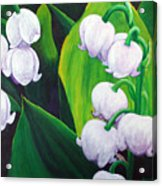 Lilies Of The Valley Acrylic Print