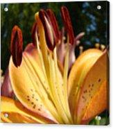 Lilies Orange Glowing Lily Flowers Giclee Prints Baslee Troutman Acrylic Print