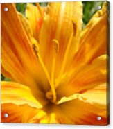 Lilies Orange Yellow Lily Flower 1 Giclee Art Prints Baslee Troutman Acrylic Print