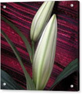 Lilies Paired On Red Brocade Acrylic Print