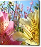 Lilies Pink Yellow Lily Flowers Canvas Art Prints Baslee Troutman Acrylic Print