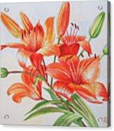 Lilies.2007 Acrylic Print