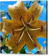 Lilium Yellow Acrylic Print