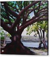 Liliuokalani Park Tree Acrylic Print