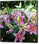 Lillies Galore Acrylic Print