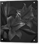 Lillies In Black And White Acrylic Print