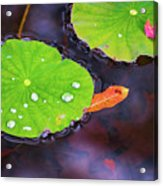 Lillies On Water Acrylic Print