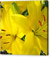Lilly Flowers Art Prints Yellow Lilies Floral Baslee Troutman Acrylic Print