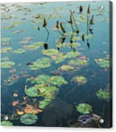 Lilly Pad In Pond  Acrylic Print