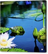 Lilly Pad Acrylic Print