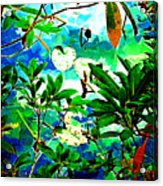 Lilly Pods Acrylic Print