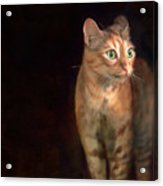 Lilly Standing At The Door Acrylic Print by Hazel Billingsley