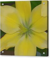 Lilly With Artistic Beauty Acrylic Print