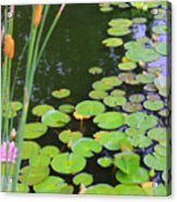Lillypads And Cattails Acrylic Print