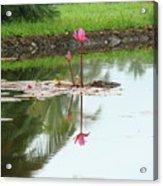 Lily-3 Acrylic Print