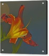 Lily Abstract Dark Background Bright Flower Acrylic Print