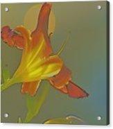 Lily Abstract Medium Background Medium Toned Flower Acrylic Print