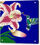 Lily And Hummingbird Acrylic Print