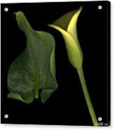 Lily And Leaf Number Two Acrylic Print