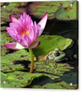 Lily And The Bullfrog Acrylic Print