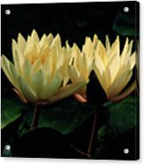 Lily Duet Acrylic Print