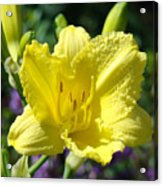 Lily Flower Art Print Canvas Yellow Lilies Baslee Troutman Acrylic Print